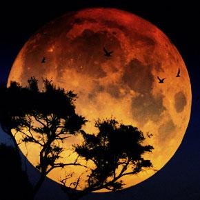 Mead-Moon