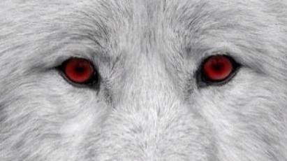 9936d217853626a46561a8fbfa01f81f--wolf-face-wolf-eyes