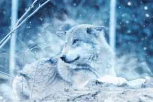 animal close up cold danger